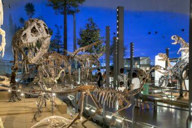 恐竜博物館周辺のおすすめ観光スポット、ランチ、宿泊、温泉情報