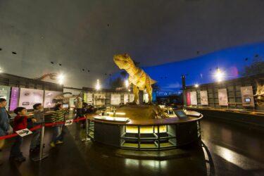 福井県立恐竜博物館の子供がいる家族の見どころ情報