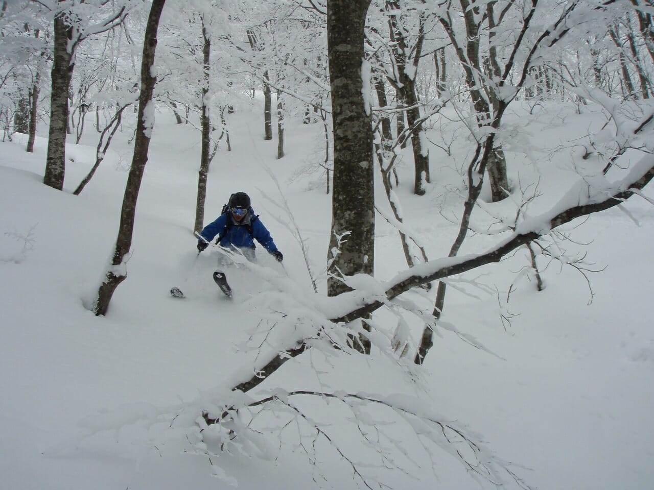 関西おすすめスキー場 ツリーランコース