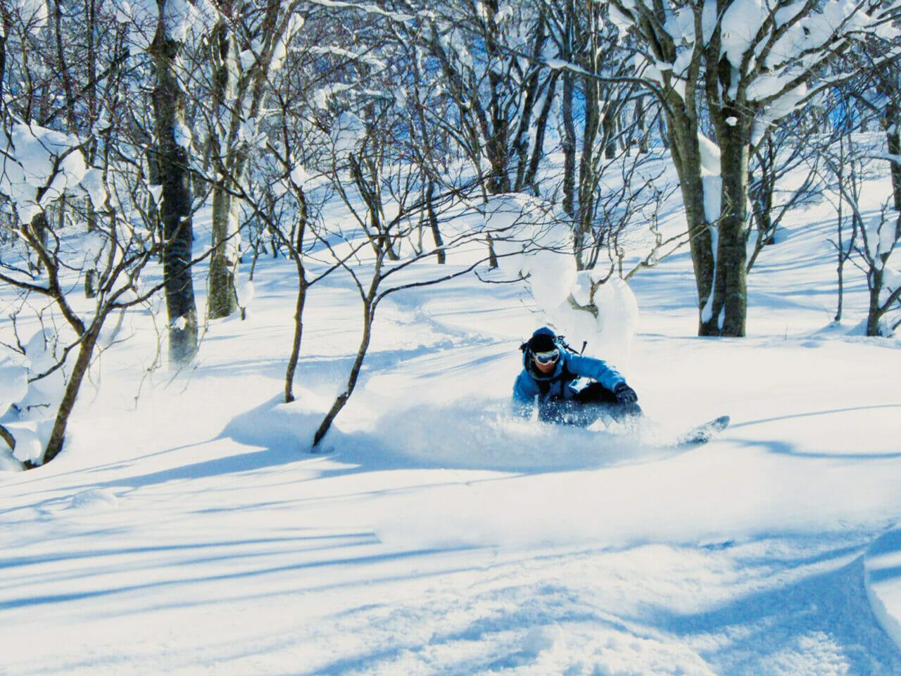 ふかふかの新雪パウダーが味わえる非圧雪ツリーラン